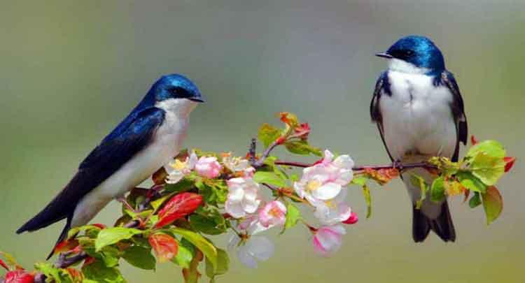 ave curiosidades