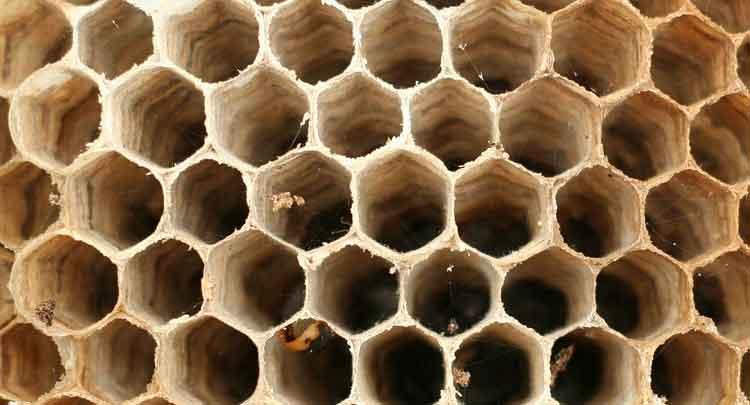 Photo of Colmeia de Abelha: tipos de colmeias de abelhas