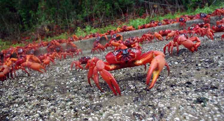 Photo of Curiosidades sobre os caranguejos: características gerais
