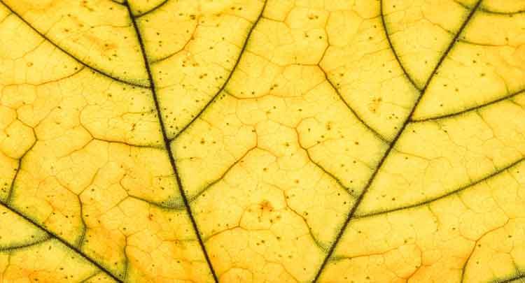 Folhas - Reino Plantae