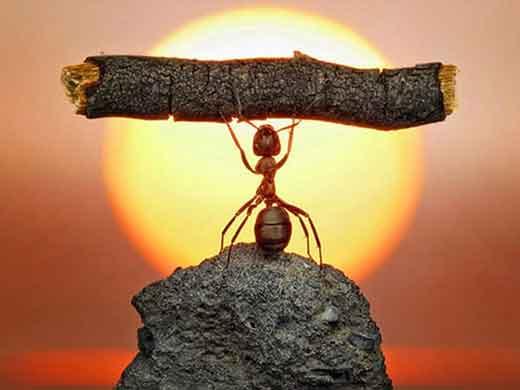 Força das formigas