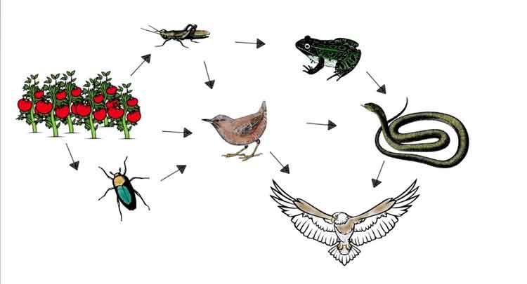 Relações entre os seres vivos