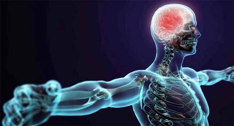 Sistema nervoso aula completa