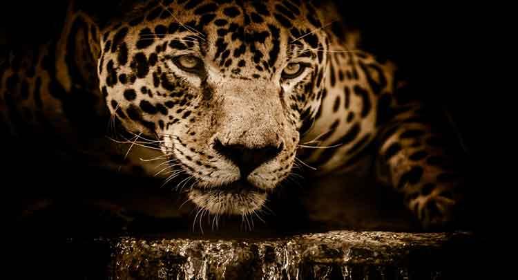 Photo of Animais Silvestres: definição, o que são, exemplos